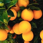 Shocking Facts About Vitamin C